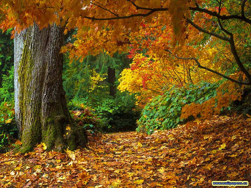fall-of-autumn-leaves-wallpaper.jpg